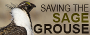 Saving the Sage Grouse Logo