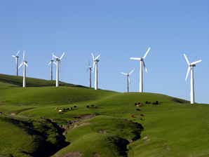 Wind turbine w/ cattle