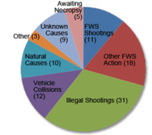 Known Mexican wolf mortalities, 1998-2009, by cause of death pie chart