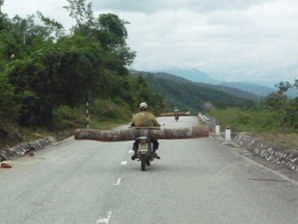 Transporting illegal logs