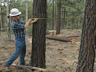 As Ariz.'s San Juan fire rages on, crews tout value of forest-thinning project