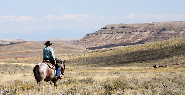 Cowboy surveying Dry Piney Wyoming. Photo credit: Kat McConnell/BLM/Flickr