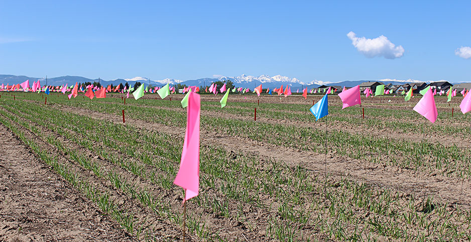 Montana State's experimental fields. Photo credit: Marc Heller/E&E News