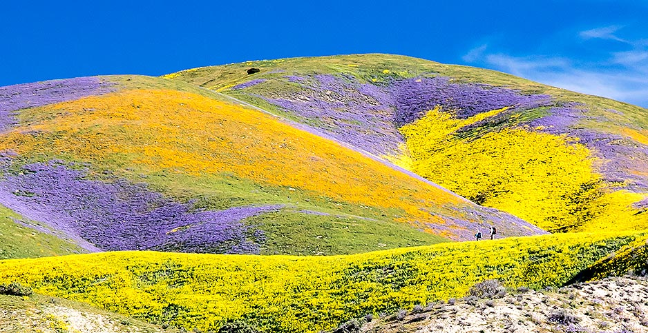 Carrizo Plain National Monument. Photo credit: Bob Wick/Bureau of Land Management/Flickr