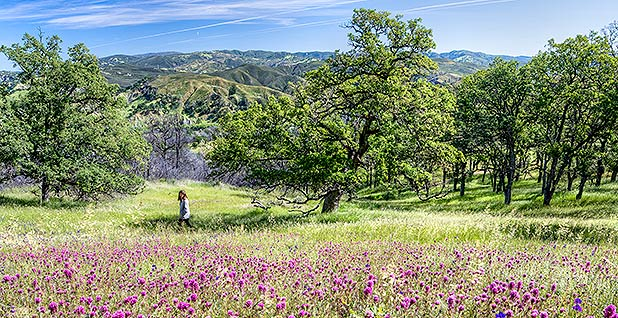 Berryessa Snow Mountain National Monument. Photo credit: Bob Wick/Bureau of Land Management/Flickr