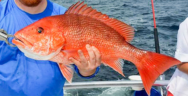 Red snapper. Photo credit: Distraction Charters/NOAA Fisheries