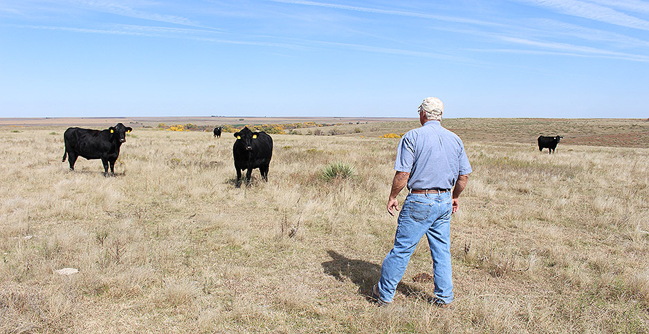 Kevin Holle rounds up cattle. Photo credit: Marc Heller/E&E News
