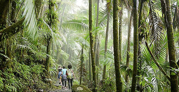 Rainforest. Photo credit: NOAA