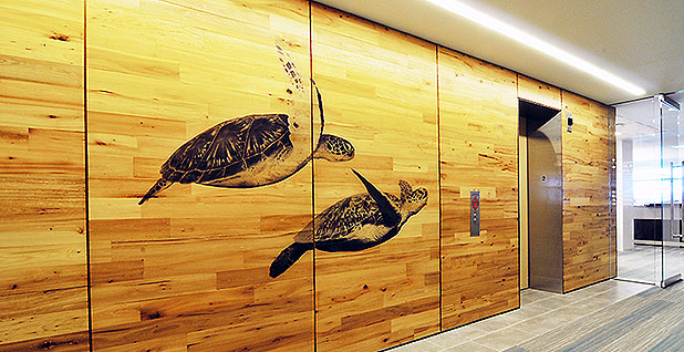 Laser-printed images of sea turtles adorn office walls at the Fish and Wildlife Service headquarters in Falls Church, Va. Photo credit: Gilbane Building Co.