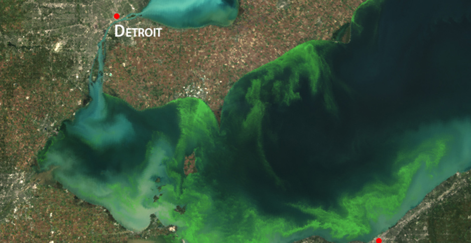 Bright green algae is seen across most of Lake Erie from a satellite. Photo credit: MERIS/ESA/NOAA