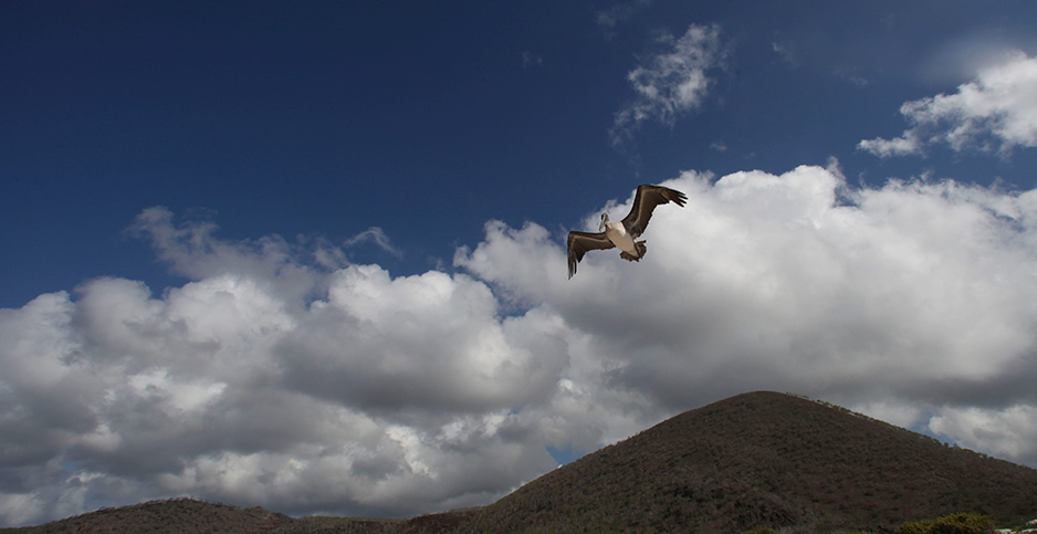 An albatross flies over Floreana Island in the Gallápagos, Ecuador. Photo credit: Dolores Ochoa/Associated Press
