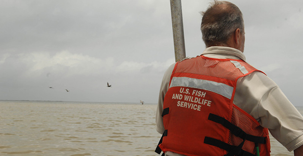 Fish and Wildlife Service employee on a boat. Photo credit: Deepwater Horizon Response/Flickr