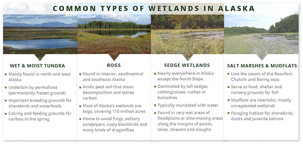 Types of Alaska wetlands graphics. Graphic: Claudine Hellmuth/E&E News. Photos:Alaska Department of Fish and Game (Tundra);  M. LaCroix, DNR/State of Alaska (Bog/Sedge/Salt marsh)