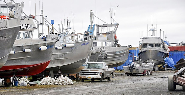 Fishing boats in Alaska's Bristol Bay. Photo credit: EPA/Flickr