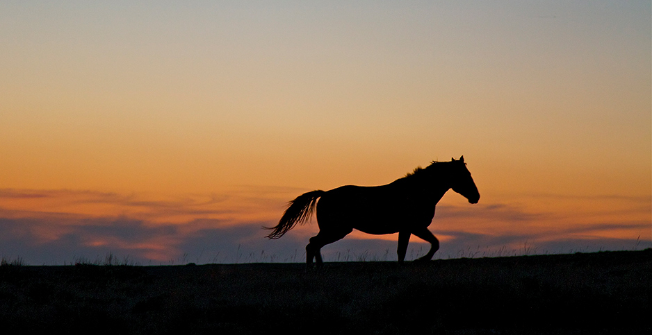 Wild horse. Photo credit: arfull…in Wyoming/Flickr