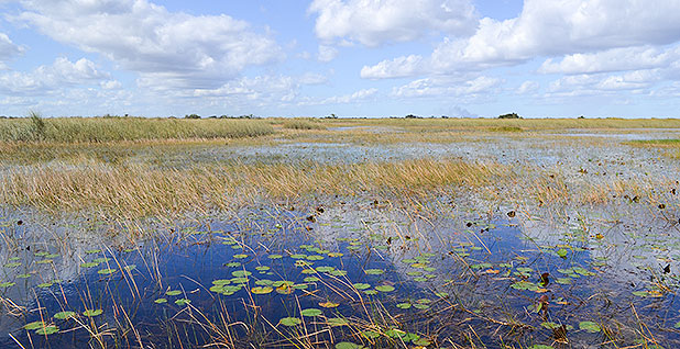 Loxahatchee National Wildlife Refuge in Florida. Photo credit: Corbin Hiar/E&E News