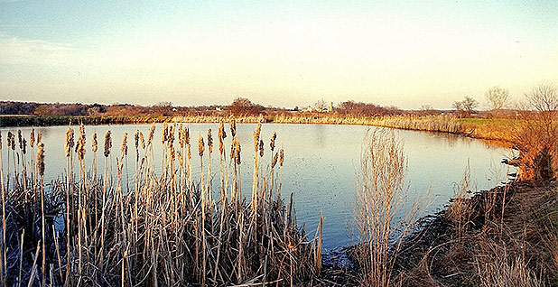 Wetlands. Photo credit: Montgomery County Planning Commission/Flickr