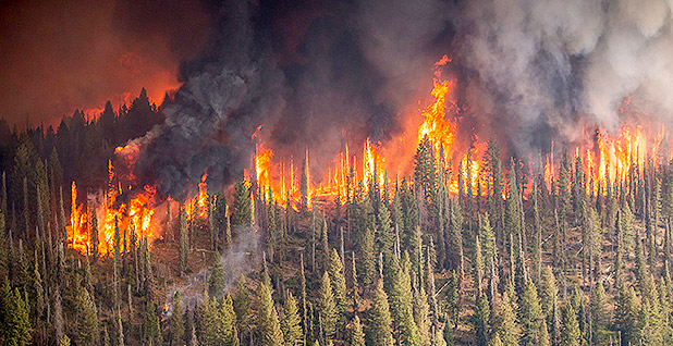 Wildfire. Photo credit: @forestservice/Twitter