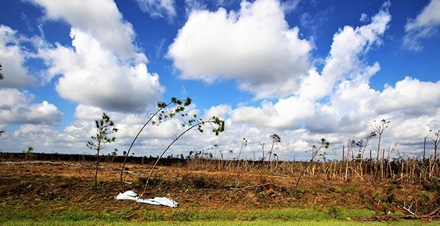 A field of damaged trees is seen in Florida after Hurricane Michael. Photo credit: James McCloskey/Flickr
