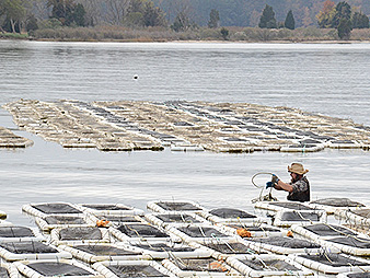 Floating oyster cages. Photo credit: Maryland Department of Natural Resources