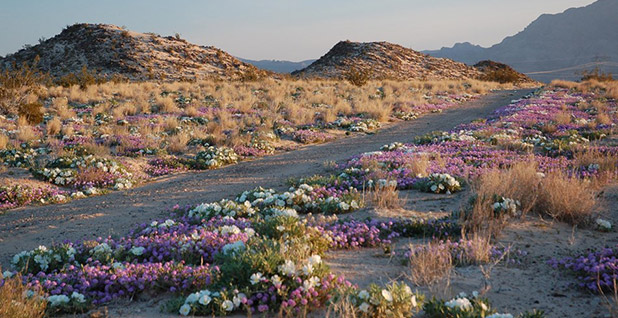 Mojave National Preserve. Photo credit: National Park Service
