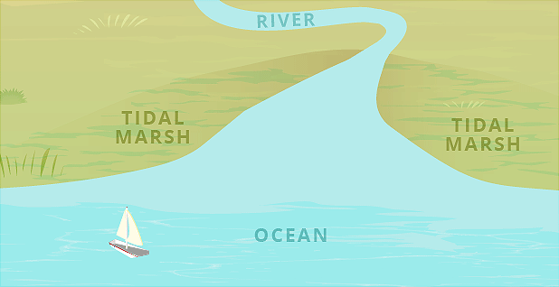 Ocean, tidal marshes, river illustration, WOTUS. Graphic credit: Claudine Hellmuth/E&E News