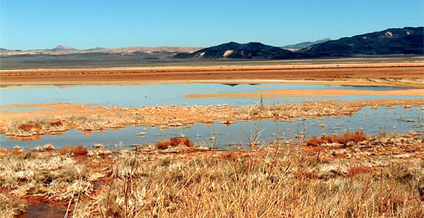 Harper Lake marsh. Photo credit: Bureau of Land Management/Wikipedia