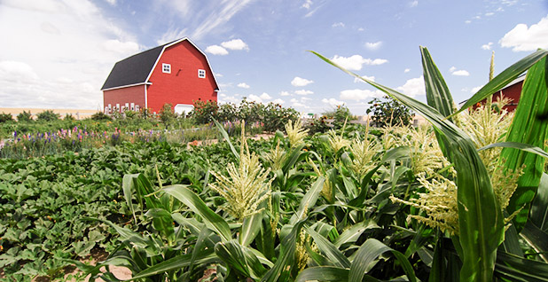 Plants growing in front of a red barn. Photo credit: Ron Nichols/U.S. Department of Agriculture/Flickr