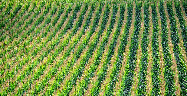 Field of crops. Photo credit: pxhere