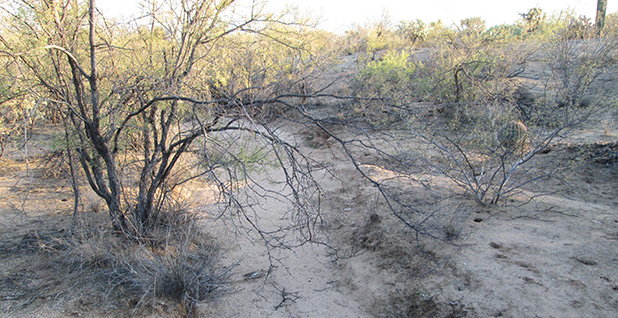 Dry stream bed. Photo credit: $1LENCE D00600D/Wikipedia