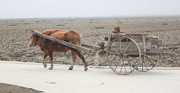 Ox cart in North Korea. Photo credit: Margaret Palmer
