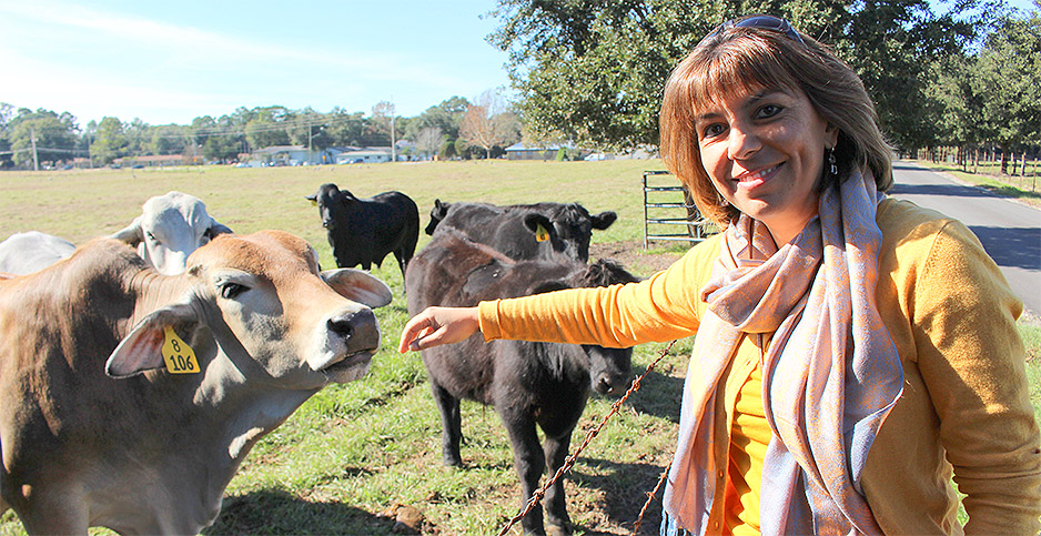 Researcher Raluca Mateescu and cattle. Photo credit: Marc Heller/E&E News