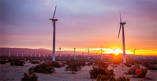 Wind farm is seen in Palm Springs, Calif. Photo credit: Tony Webster/Wikimedia Commons