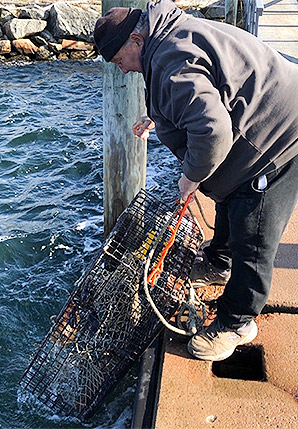Bobby Guzzo pulls up a fish trap at a dock. Photo credit: Rob Hotakainen/E&E News