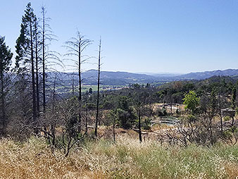 Long grasses grow in front of fire damaged trees overlooking Napa Valley. Photo credit: Marc Heller/ E&E News