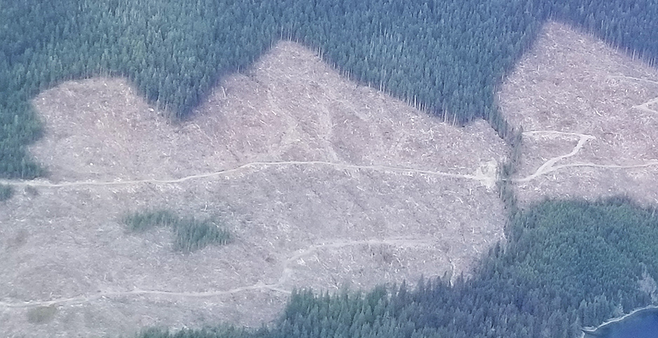 An aerial view of a clear-cut area recently harvested in the Tongass National Forest in Southeast Alaska. Photo credit: Marc Heller/E&E News