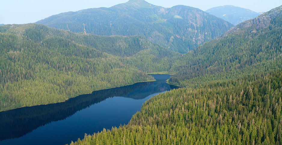 An aerial view of Tongass National Forest Photo credit: Alan Wu/Flickr