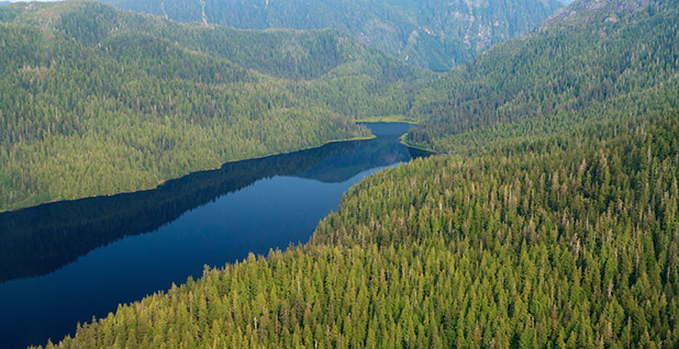 Aerial view of the Tongass National Forest in Alaska. Photo credit:  Alan Wu/Flickr