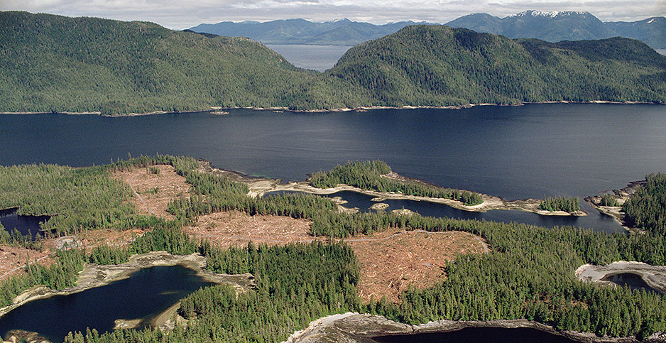 Aerial view of clear-cut temperate forest in Tongass National Forest. Photo credit: Gerry Ellis/Minden Pictures/Newscom