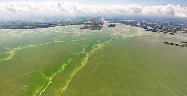 Lake Erie algal bloom. Photo credit: Aerial Associates Photography Inc/NOAA Great Lakes Environmental Research Laboratory/Flickr