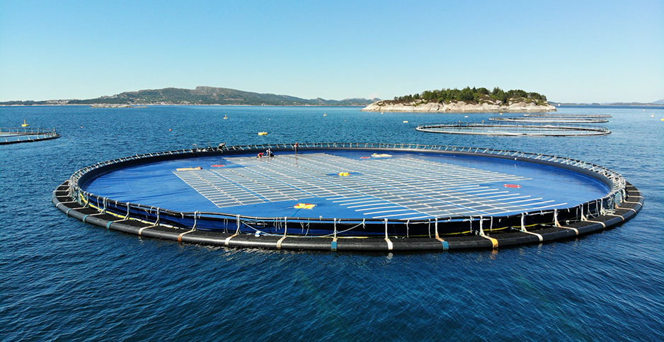 A Norwegian company called Ocean Sun -- inspired by work on offshore salmon farms -- is developing floating solar arrays. Photo credit: Courtesy Ocean Sun
