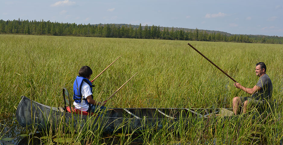 Native wild rice. Photo credit: Great Lakes Indian Fish & Wildlife Commission.