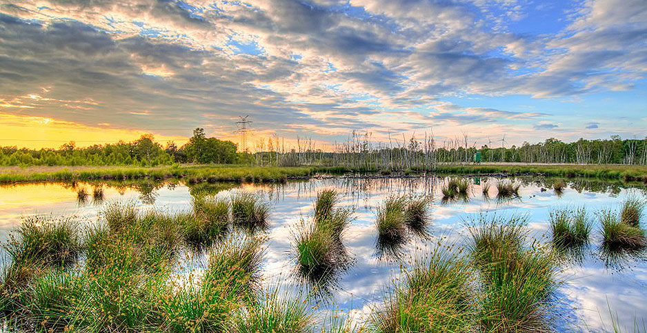 Wetlands at sunset with power lines in the background. Photo credit: Peter Heeling/Skitterphoto