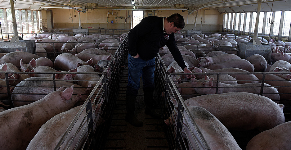 Hog barn in Minnesota. Photo credit: Nicolas Pfosi/REUTERS/Newscom