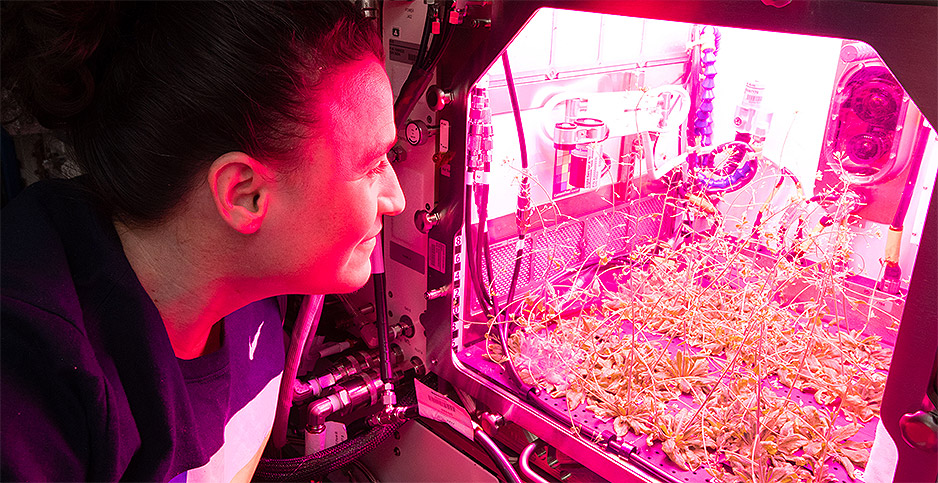 Serena Auñón-Chancellor checks on plants at International Space Station. Photo credit: NASA