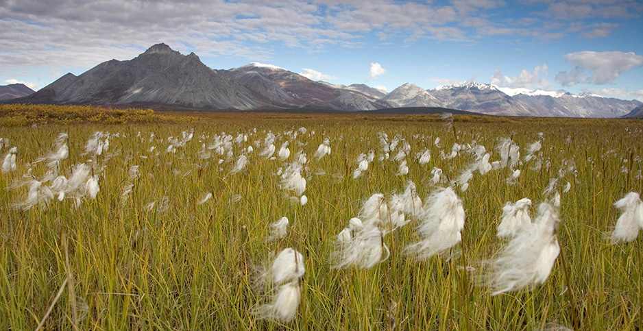 Arctic National Wildlife Refuge. Photo credit: Hillebrand/U.S. Fish and Wildlife Service