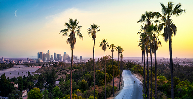 Road with palm trees with Los Angeles in the background. Photo credit: Cameron Venti/@ventiviews/Unsplash.com