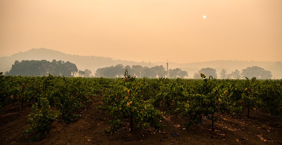 A grape field in smokey air, Kenwood, Calif., Sept. 28, 2020. Photo credit: Chris TuiteImage/ImageSpace/ZUMA Press/Newscom