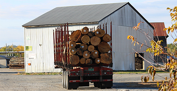 Cut timber on a truck. Photo credit: Marc Heller/E&E News
